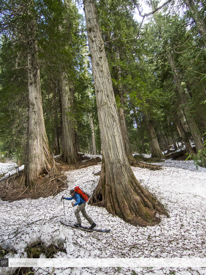 Skinning through the old growth