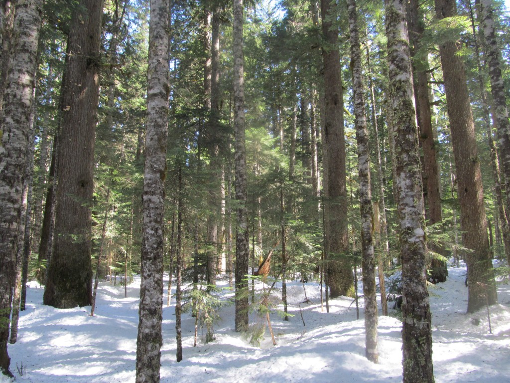 Easy skinning through old growth