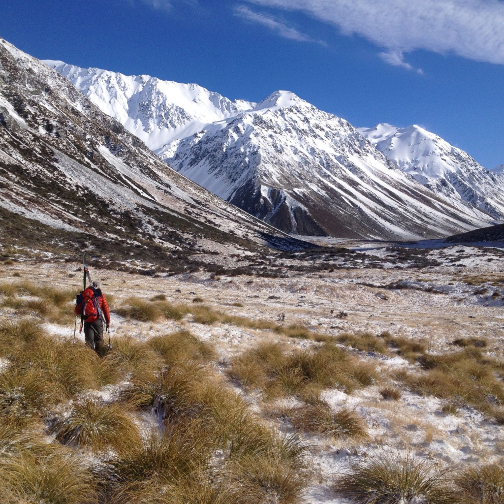 Land of the Golden Tussock